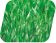 Canoff Grass